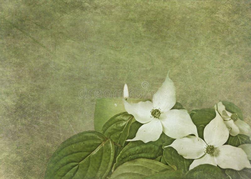 blommar dogwood vektor illustrationer
