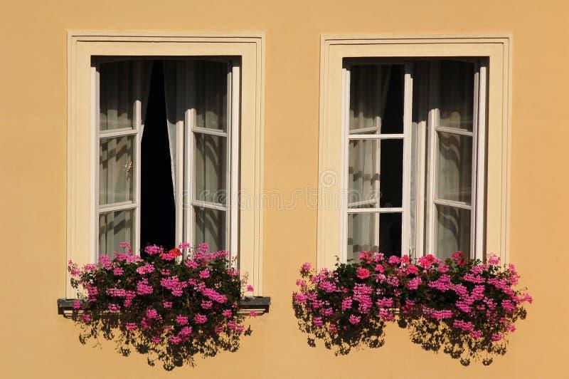 blommar fönster arkivfoto