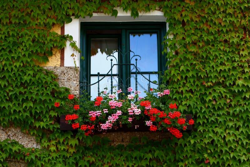 blommar fönsterbräda royaltyfria bilder