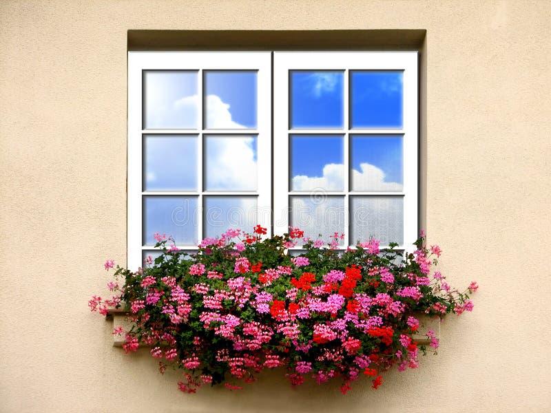 blommar fönstret