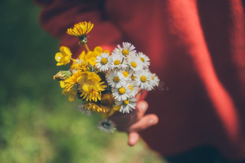 blommar flickaholdingen Bukett av blommor Vårbakgrund Bukett av tusenskönor Makrosikt av härliga vita tusenskönor arkivbild
