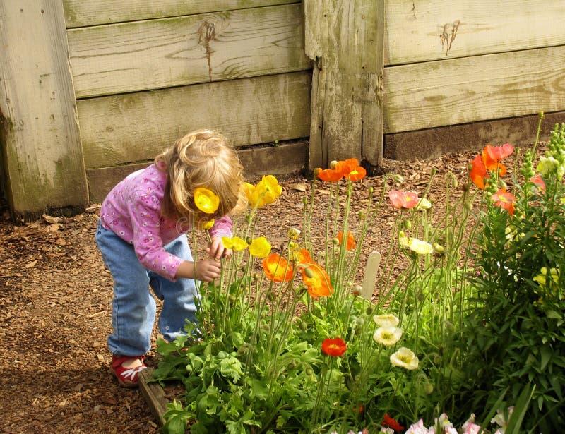 blommar flickan little som luktar fotografering för bildbyråer