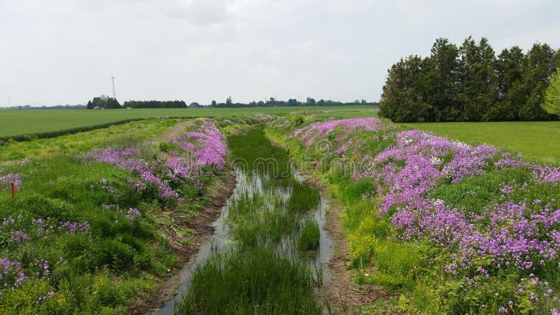 blommar floden arkivbilder