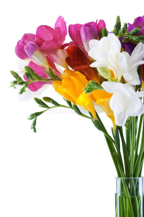 blommar freesia royaltyfria foton