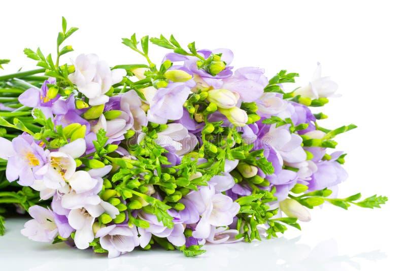 blommar freesialilan royaltyfri bild