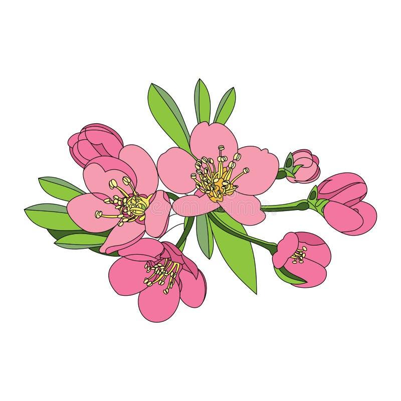 blommar fruktträdet - äpple, körsbär eller april royaltyfri illustrationer