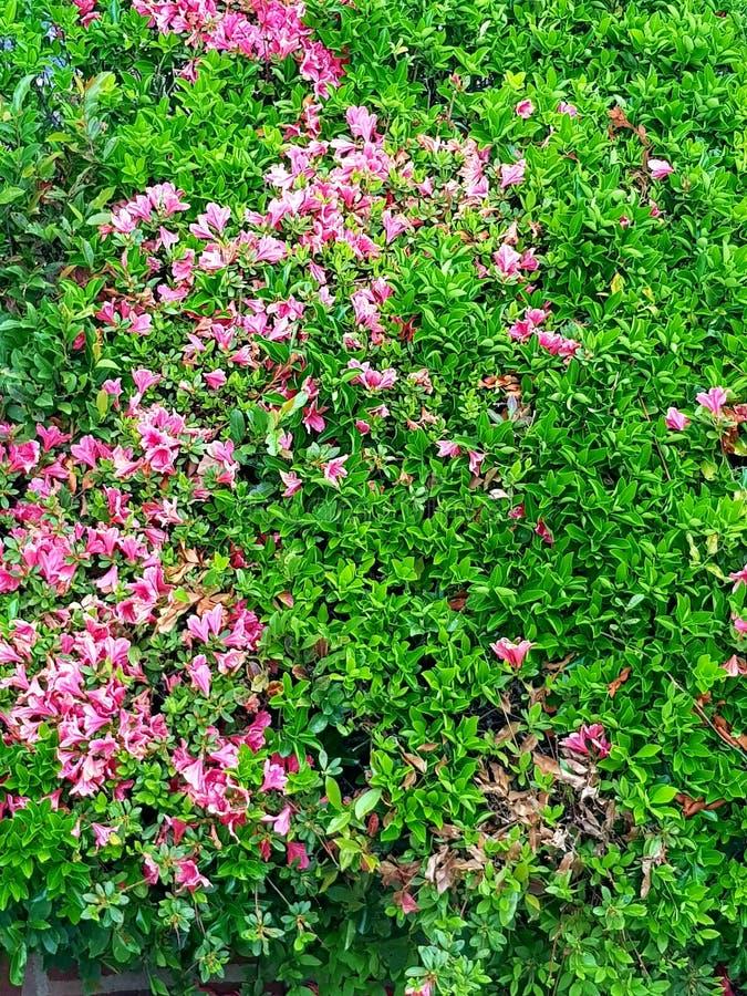 Blommar full blom fotografering för bildbyråer