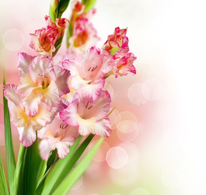 blommar gladiolusen arkivfoto