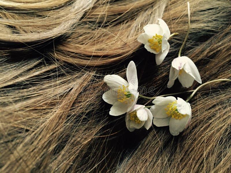 blommar hår royaltyfri fotografi