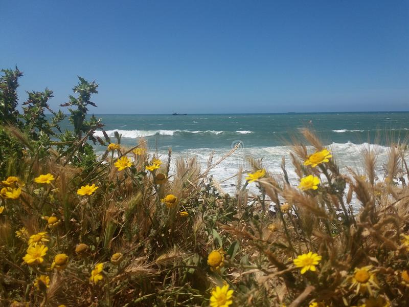 blommar havet arkivfoto