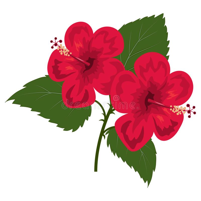 blommar hibiskusred stock illustrationer