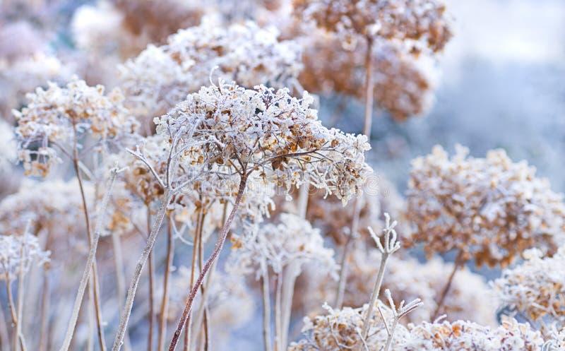 blommar icy vinter arkivbild