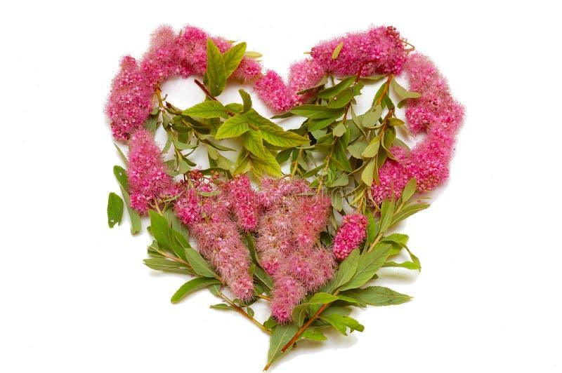 blommar isolerad hjärta royaltyfria foton