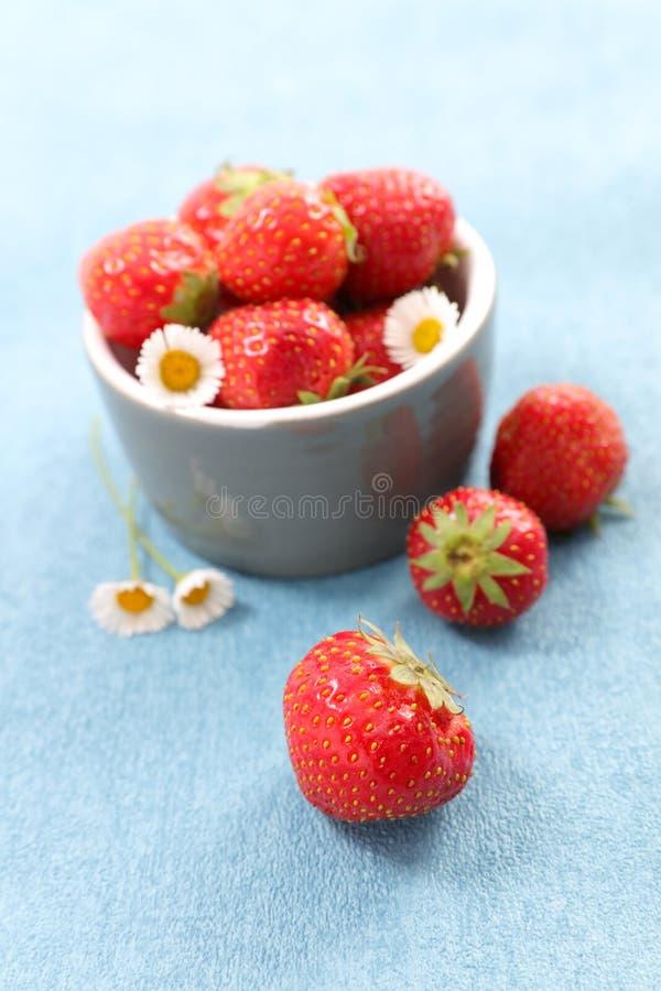 blommar jordgubben arkivfoto