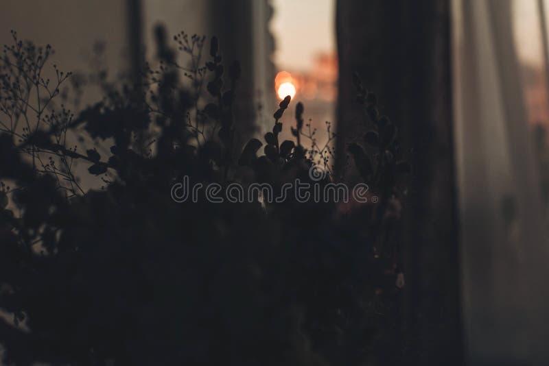 Blommar konturn i solnedgångljus vildblommor i solljus i c arkivbild