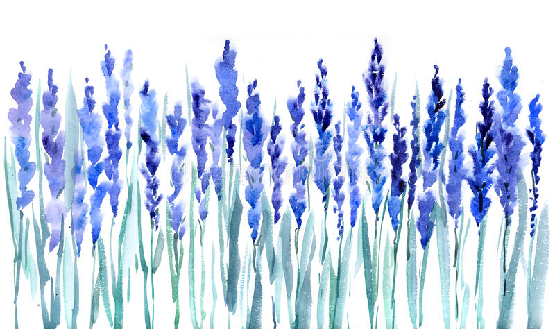 blommar lavendel arkivbild
