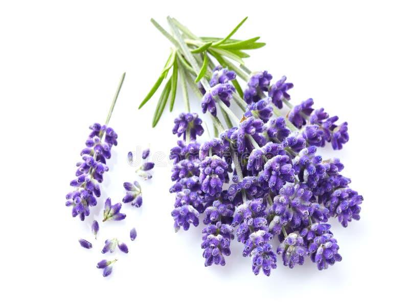 blommar lavendelwhite arkivfoto