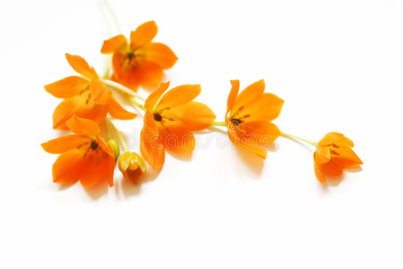 blommar liten yellow arkivfoton