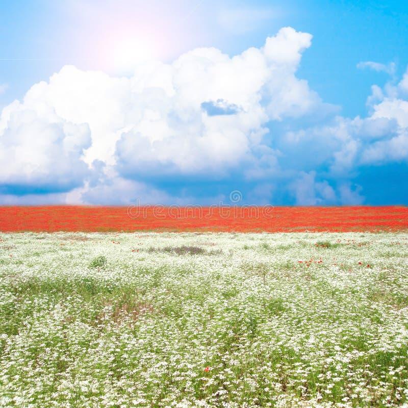 blommar många ängen arkivbild