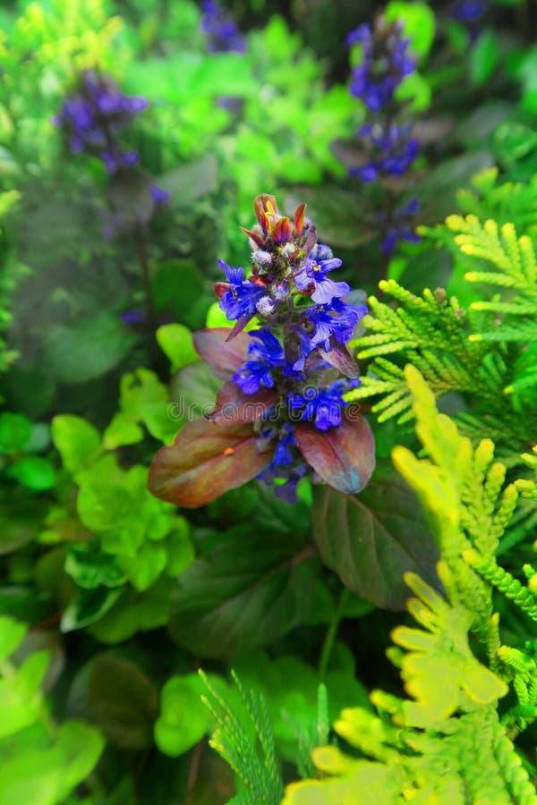 blommar magi royaltyfria bilder