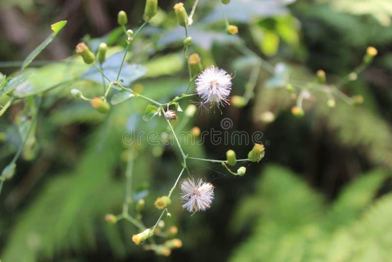 blommar mycket litet royaltyfria foton