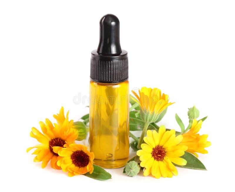 Blommar nödvändig olja för aromatherapyen med ringblomman isolerad vit bakgrund arkivbild