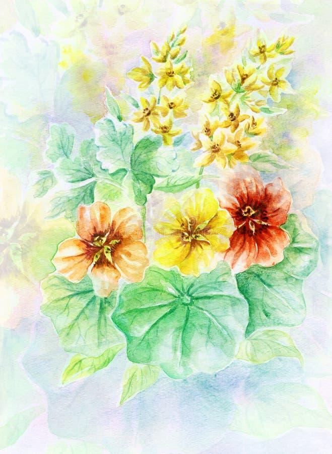 blommar nasturtiumen royaltyfri illustrationer