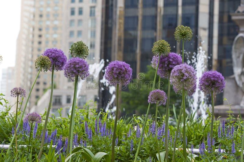 blommar New York royaltyfri bild