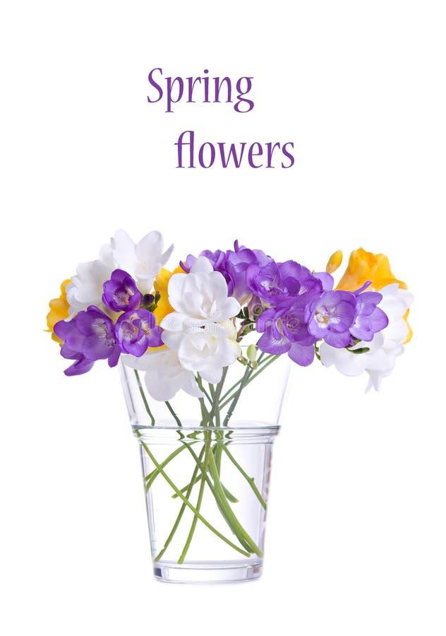 blommar ny fresia royaltyfria bilder