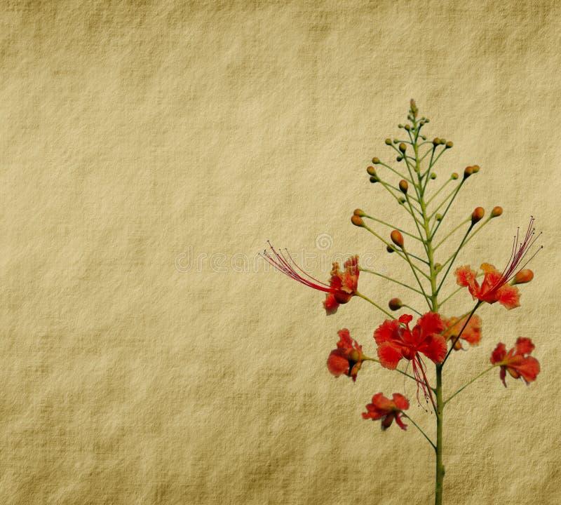 blommar påfågeltreen vektor illustrationer