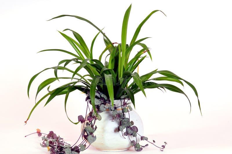 blommar phouseväxter arkivbild
