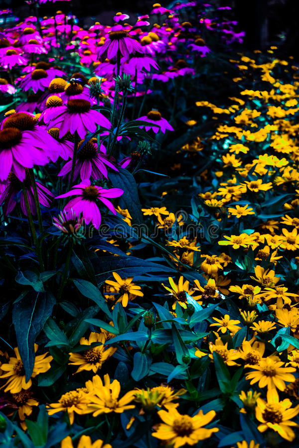 blommar purpur yellow royaltyfri fotografi