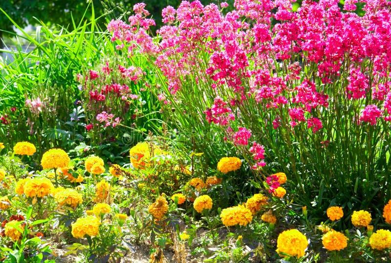 blommar röd yellow royaltyfria bilder