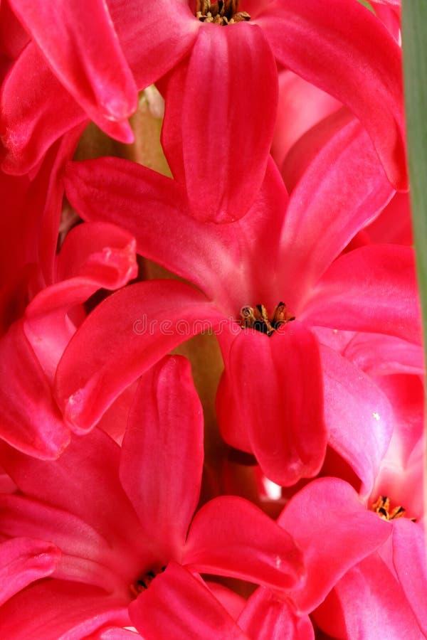 blommar red royaltyfria bilder