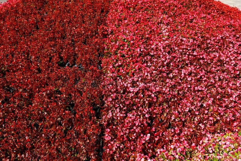 blommar red Höstfärger i stenskoglandskapet i Yunnan, Kina royaltyfria foton