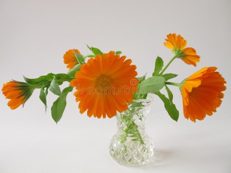 blommar ringblommavasen royaltyfri foto
