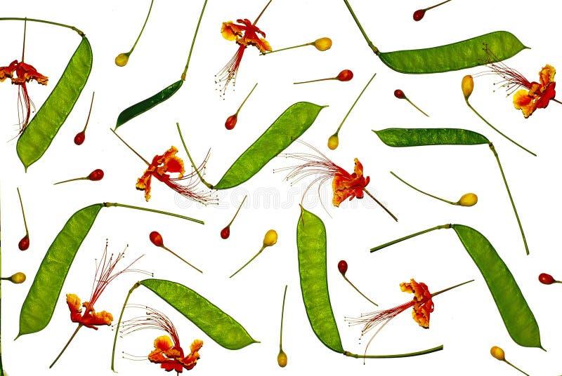 Blommar sammansättning Ram som göras från påfågelblomman vektor illustrationer