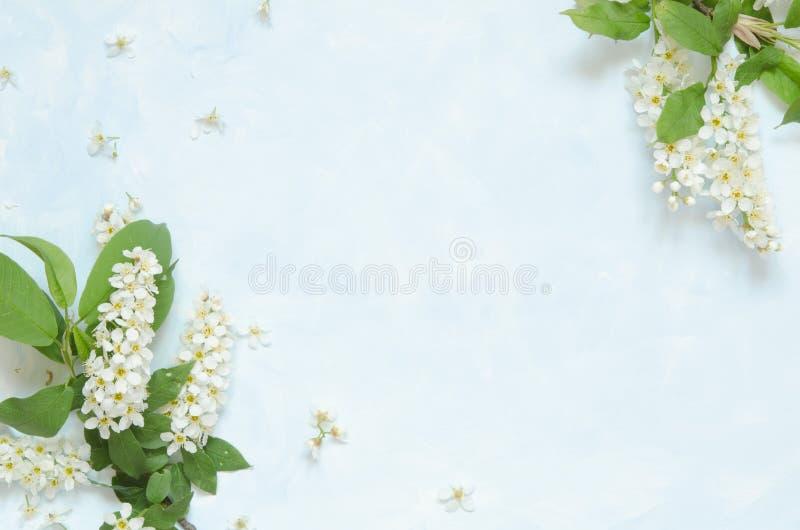 Blommar sammans?ttning Vår eller sommarbakgrund; hägg för nya blommor på blå bakgrund - L?gga framl?nges, den b?sta sikten, kopie arkivbild