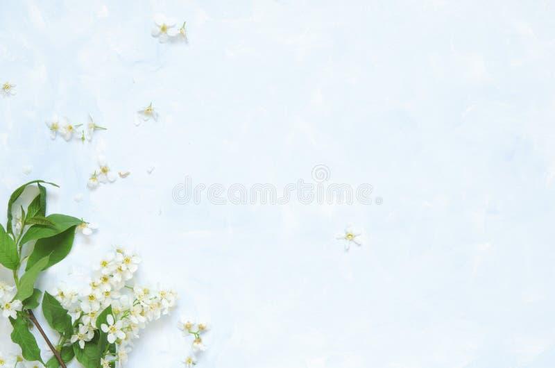 Blommar sammans?ttning V?r eller sommarbakgrund; h?gg f?r nya blommor p? bl? bakgrund - L?gga framl?nges, den b?sta sikten, kopie royaltyfri fotografi