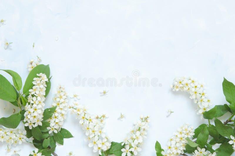 Blommar sammans?ttning V?r eller sommarbakgrund; h?gg f?r nya blommor p? bl? bakgrund - L?gga framl?nges, den b?sta sikten, kopie royaltyfria foton