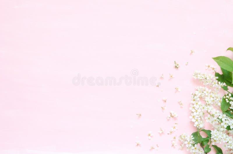Blommar sammans?ttning V?r eller sommarbakgrund; h?gg f?r nya blommor p? rosa bakgrund - L?gga framl?nges, den b?sta sikten, kopi arkivbilder