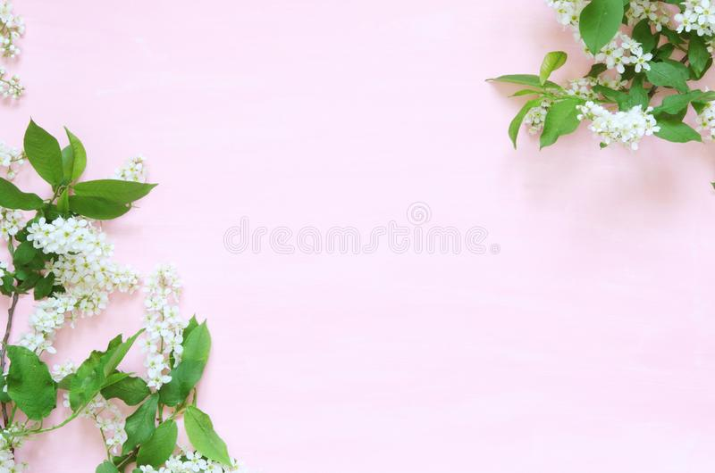 Blommar sammans?ttning V?r eller sommarbakgrund; h?gg f?r nya blommor p? rosa bakgrund - L?gga framl?nges, den b?sta sikten, kopi royaltyfri fotografi