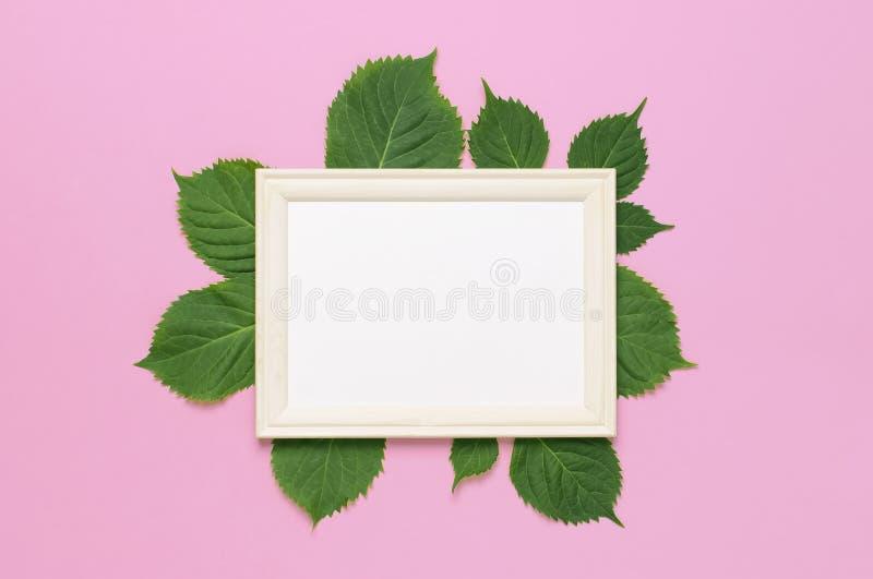 Blommar sammans?ttning Vita träfotoramar med tomt papper, den nya gröna vanliga hortensian lämnar på rosa bakgrund Lekmanna- ?ver royaltyfria bilder