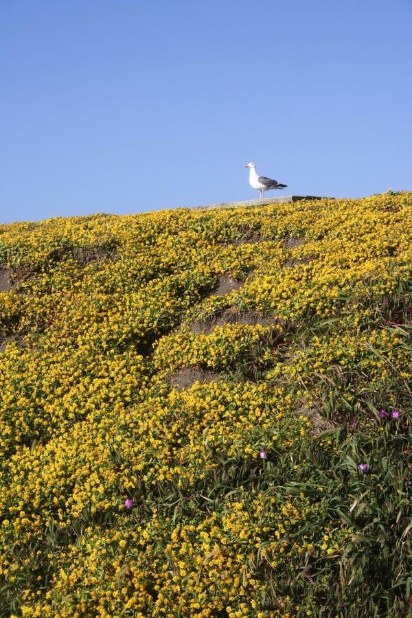 blommar seagullen royaltyfri foto
