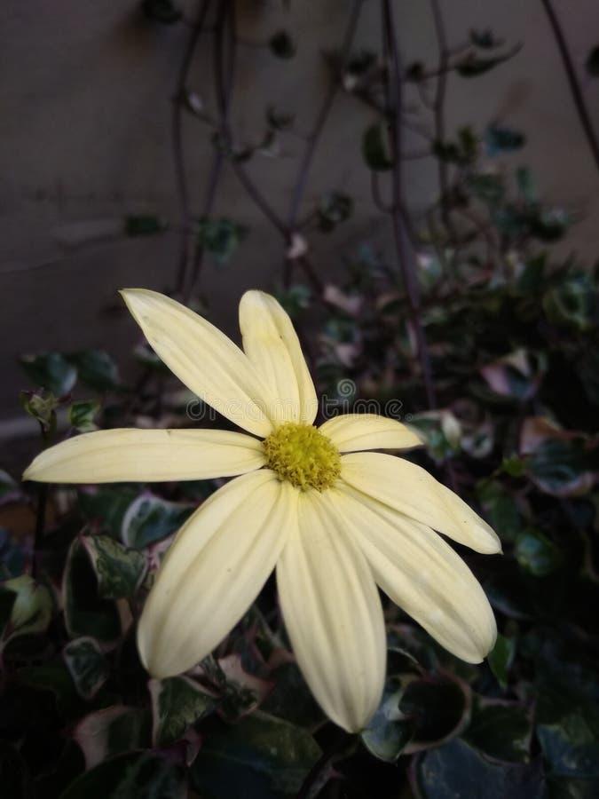 Blommar skönhet royaltyfria foton