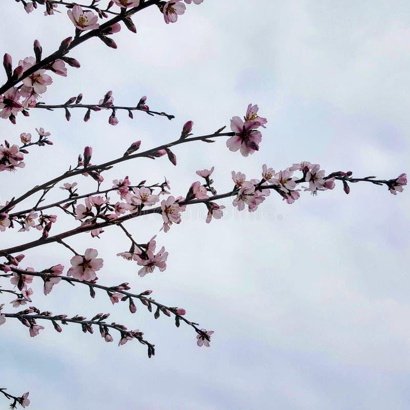 blommar skyen arkivbilder