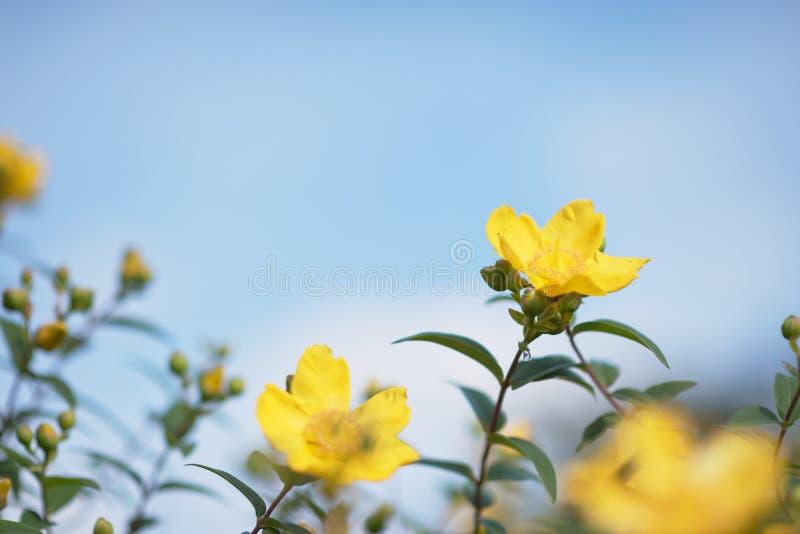 blommar skyen royaltyfri fotografi