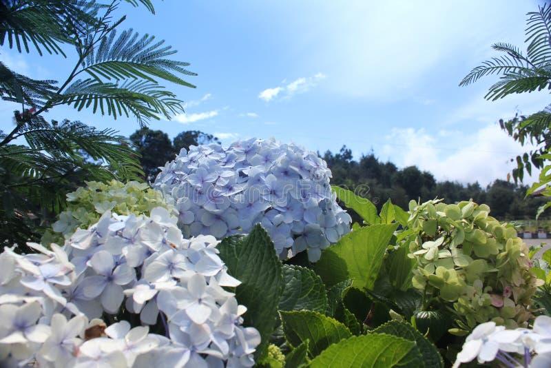 blommar skyen under royaltyfria foton