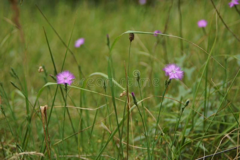 blommar sommar arkivfoton