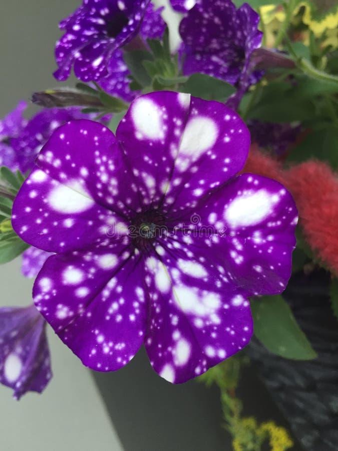 blommar starry universum för oändligt skyavstånd royaltyfri fotografi